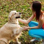 Dog-Training-Brandon